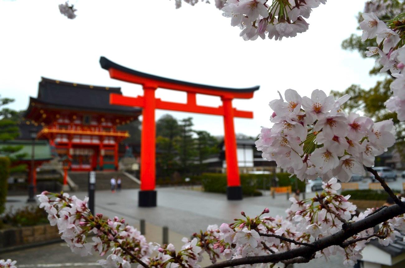 伏見稲荷大社の桜